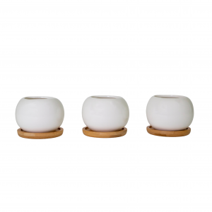 Modern Rounded Ball Ceramic White Tabletop Plant Pot Set with Bamboo Coasters