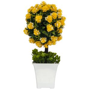 Small Shrub with Vibrant Yellow Flowers in White Plastic Pot