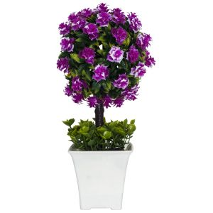 Small Shrub with Vibrant Pink Flowers in White Plastic Pot
