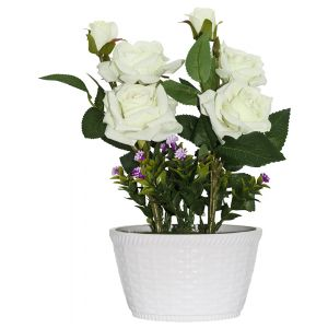 Stunning White Roses in White Wicker Style Ceramic Vase